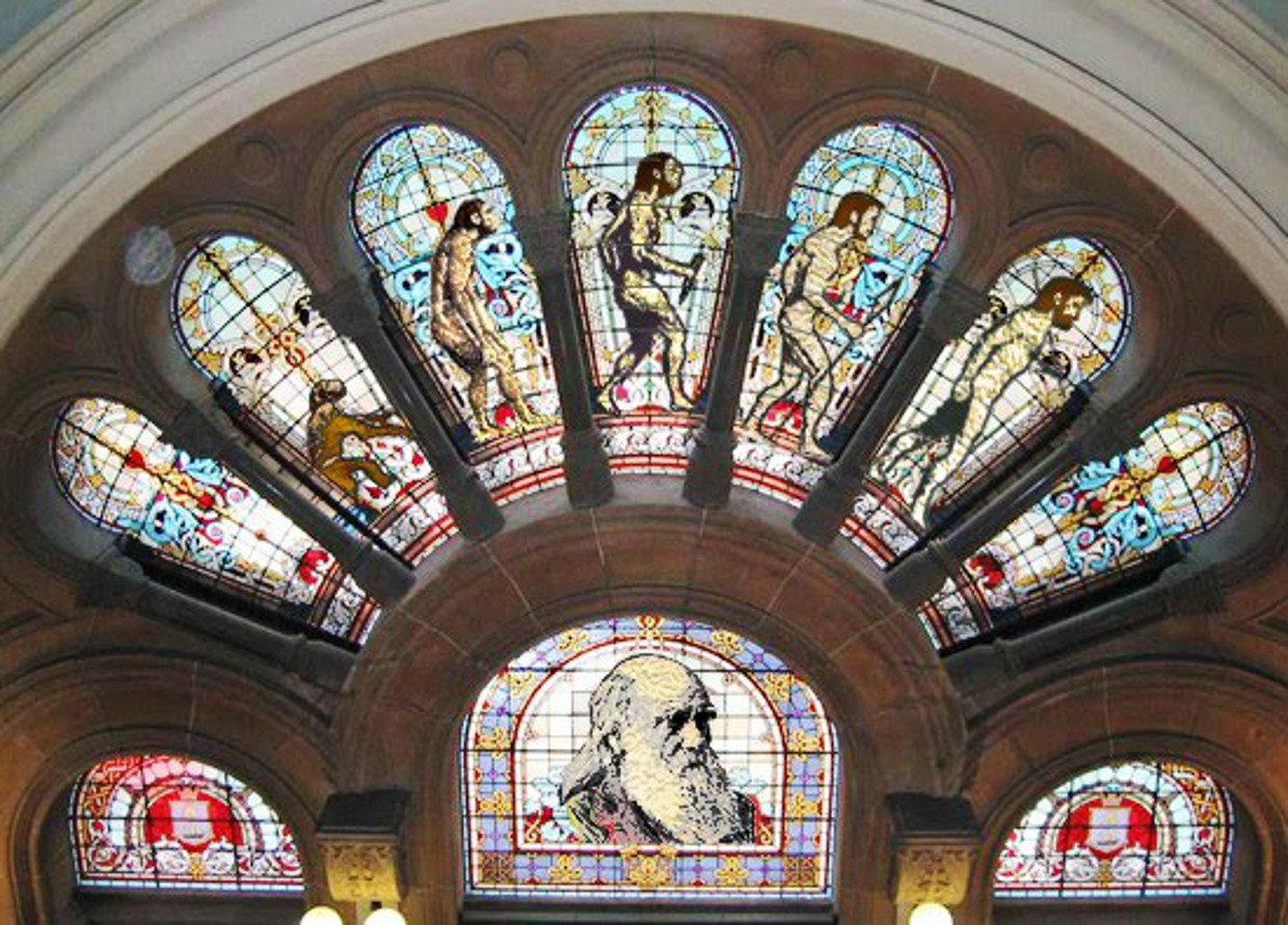 darwin stained glass